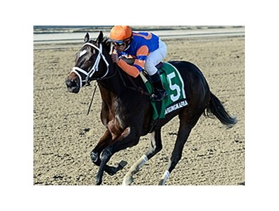 "Stopchargingmaria won the 2013 Tempted Stakes.<br><a target=""blank"" href=""http://photos.bloodhorse.com/AtTheRaces-1/at-the-races-2013/27257665_QgCqdh#!i=2881577631&k=x8kGt4c"">Order This Photo</a>"