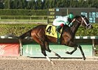 Luis Saez and Turbo Compressor take the Carl G. Rose Classic on Florida Millions Day at Calder.