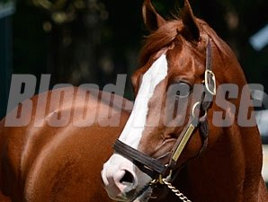 Shackleford - Saratoga August 3, 2012.