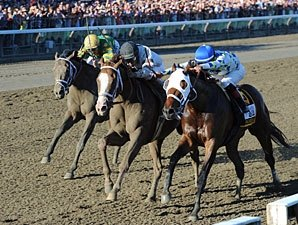 Travers Day Handle, Attendance Increase
