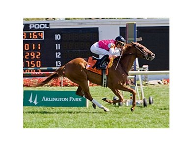 Workin for Hops cruises in the American Derby at Arlington.