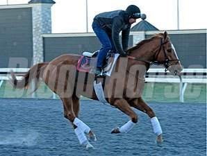Wise Dan at Keeneland, April 2013.