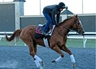 "Wise Dan<br><a target=""blank"" href=""http://photos.bloodhorse.com/AtTheRaces-1/at-the-races-2013/27257665_QgCqdh#!i=2440857468&k=PBfvCkd"">Order This Photo</a>"