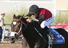 Persuasive Paul Captures Turf Paradise Derby
