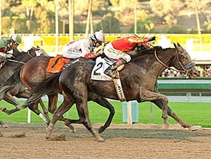 Shakin It Up wins the 2013 Malibu Stakes.