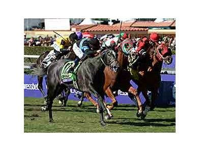 "Mizdirection wins the 2013 Breeders Cup Turf Sprint . <br><a target=""blank"" href=""http://photos.bloodhorse.com/BreedersCup/2013-Breeders-Cup/Turf-Sprint/33149903_wM4Qk7#!i=2878267584&k=4gKcZ2b"">Order This Photo</a>"