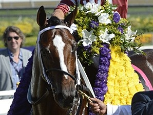 Tapizar after winning the Breeders' Cup Dirt Mile.
