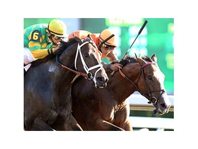 Aikenite (left) finished second by a nose in the 2011 running of the Phoenix.