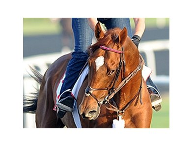 Acatenango is the broodmare sire of Animal Kingdom.