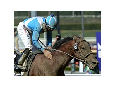 "Calidoscopio<br><a target=""blank"" href=""http://photos.bloodhorse.com/BreedersCup/2012-Breeders-Cup/Marathon/26130229_MsH7Ls#!i=2191905866&k=C622hwd"">Order This Photo</a>"