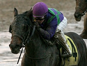Avies Tale in the 2011 Blushing KD Handicap.