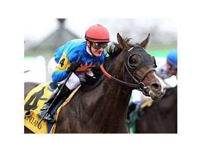 Newsdad makes his 2013 debut in the Mac Diarmida Stakes at Gulfstream Park.