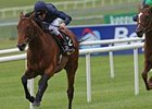 Duke of Marmalade Notches Second Group I