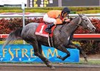 "High Resolve returns to defend her title in the Sunshine Millions Filly & Mare Sprint.<br><a target=""blank"" href=""http://www.bloodhorse.com/horse-racing/photo-store?ref=http%3A%2F%2Fpictopia.com%2Fperl%2Fgal%3Fprovider_id%3D368%26ptp_photo_id%3D7535420%26ref%3Dstory"">Order This Photo</a>"