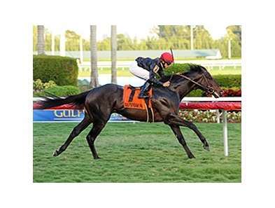 "Mr Speaker wins the Dania Beach Stakes.<br><a target=""blank"" href=""http://photos.bloodhorse.com/AtTheRaces-1/at-the-races-2013/27257665_QgCqdh#!i=2982487033&k=bXDxGHP"">Order This Photo</a>"