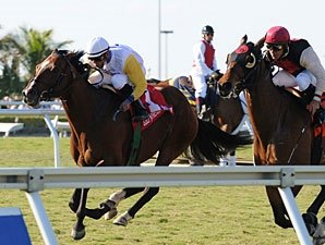 Society's Chairman Rules in Appleton Stakes