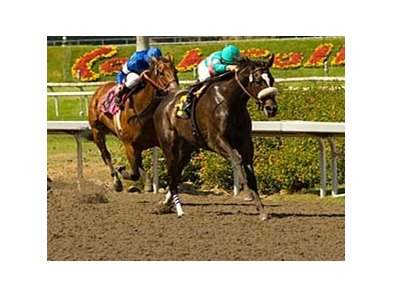 "Zenyatta looks to run her undefeated streak to nine in the BC Ladies Classic.  <br><a target=""blank"" href=""http://www.bloodhorse.com/horse-racing/photo-store?ref=http%3A%2F%2Fpictopia.com%2Fperl%2Fgal%3Fprovider_id%3D368%26ptp_photo_id%3D4706423%0D%0A%26ref%3Dstory"">Order This Photo</a>"