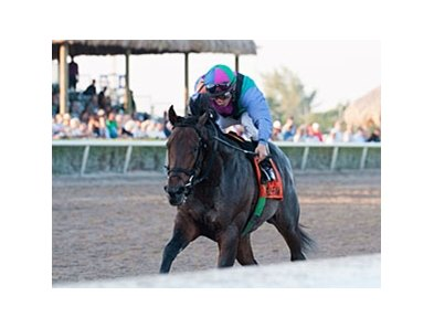 "Itsmyluckyday<br><a target=""blank"" href=""http://photos.bloodhorse.com/AtTheRaces-1/at-the-races-2013/27257665_QgCqdh#!i=2337245792&k=4sBqXrW"">Order This Photo</a>"