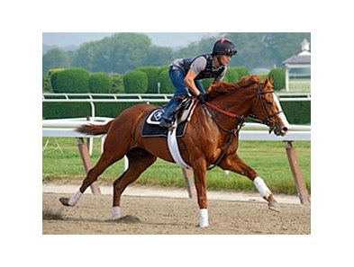 "Shackleford at Belmont Park on June 1.<br><a target=""blank"" href=""http://www.bloodhorse.com/horse-racing/photo-store?ref=http%3A%2F%2Fpictopia.com%2Fperl%2Fgal%3Fprovider_id%3D368%26ptp_photo_id%3D9546203%26ref%3Dstory"">Order This Photo</a>"