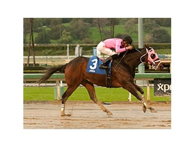 Comma to the Top won the off-the-turf Daytona Stakes (gr. II) Dec. 29 at Santa Anita Park.