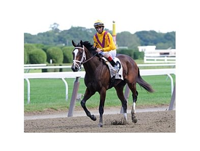 Dreaming of Julia, trained by Todd Pletcher, is entered in the Breeders' Cup Juvenile Fillies.
