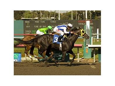 "Surf Cat, a millionaire grandson of Storm Cat, has been retired from racing for stallion duty.<br><a target=""blank"" href=""http://www.bloodhorse.com/horse-racing/photo-store?ref=http%3A%2F%2Fpictopia.com%2Fperl%2Fgal%3Fprovider_id%3D368%26ptp_photo_id%3D4422121%26ref%3Dstory"">Order This Photo</a>"