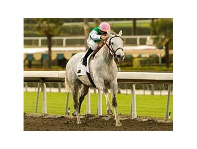"Jibboom's Buena Vista has had its Grade II Status reinstated.<br><a target=""blank"" href=""http://www.bloodhorse.com/horse-racing/photo-store?ref=http%3A%2F%2Fpictopia.com%2Fperl%2Fgal%3Fprovider_id%3D368%26ptp_photo_id%3D7762282%26ref%3Dstory"">Order This Photo</a>"