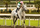 "Jibboom is all alone in mid-stretch of the Buena Vista Handicap. <br><a target=""blank"" href=""http://www.bloodhorse.com/horse-racing/photo-store?ref=http%3A%2F%2Fgallery.pictopia.com%2Fbloodhorse%2Fgallery%2F69713%2Fphoto%2F7762282%2F%3Fo%3D0"">Order This Photo</a>"