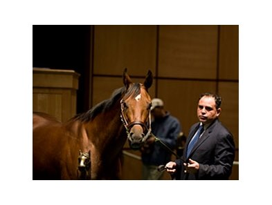 Awesome Feather brought $2.3 million to top the Fasig-Tipton Kentucky November select mixed sale.