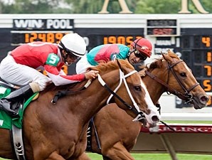 Our Lady in Red wins the 2011 Purple Violet Stakes.