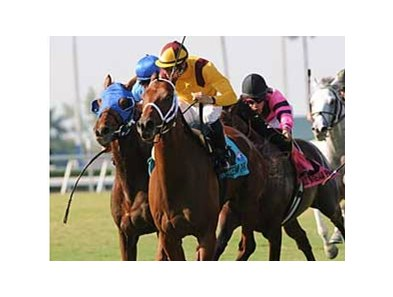 Stream of Gold came from last place to get up in the March 16 Mac Diarmida (gr. IIT) at Gulfstream Park.