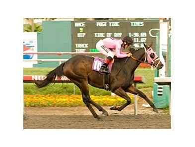 "Real Quiet winner Comma to the Top tries turf in the Generous.<br><a target=""blank"" href=""http://www.bloodhorse.com/horse-racing/photo-store?ref=http%3A%2F%2Fpictopia.com%2Fperl%2Fgal%3Fprovider_id%3D368%26ptp_photo_id%3D9297905%26ref%3Dstory"">Order This Photo</a>"