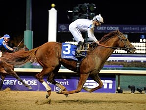 Drosselmeyer in the Breeders' Cup Classic.
