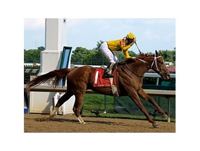 "2007 Horse of the Year Curlin will take on a top field on the turf in the Man o'War.<br><a target=""blank"" href=""http://www.bloodhorse.com/horse-racing/photo-store?ref=http%3A%2F%2Fpictopia.com%2Fperl%2Fgal%3Fprovider_id%3D368%26ptp_photo_id%3D4832693%26ref%3Dstory"">Order This Photo</a>"