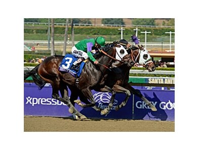 "Hightail (inside) outfights favorite Merit Man to win the Breeders' Cup Juvenile Sprint.<br><a target=""blank"" href=""http://photos.bloodhorse.com/BreedersCup/2012-Breeders-Cup/Juvenile-Sprint/26130236_bRN9v4#!i=2191121620&k=htSfGmX"">Order This Photo</a>"