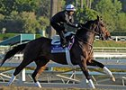 "Atigun<br><a target=""blank"" href=""http://photos.bloodhorse.com/BreedersCup/2012-Breeders-Cup/Works/26130247_gxH6nS#!i=2185430191&k=hp9BwKT"">Order This Photo</a>"