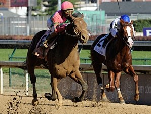 Caleb's Posse in the 2011 Breeders' Cup Dirt Mile.