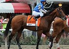 "The Big Beast<br><a target=""blank"" href=""http://photos.bloodhorse.com/AtTheRaces-1/At-the-Races-2014/i-mCSVkK9"">Order This Photo</a>"