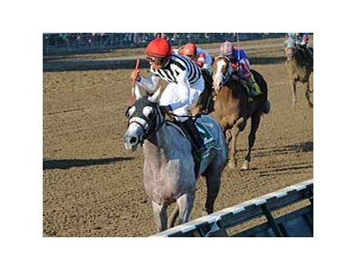 "Alan Garcia celebrates as Vineyard Haven crosses the wire in the Hopeful (gr. I). <br><a target=""blank"" href=""http://www.bloodhorse.com/horse-racing/photo-store?ref=http%3A%2F%2Fpictopia.com%2Fperl%2Fgal%3Fprovider_id%3D368%26ptp_photo_id%3D5750072%0D%0A%26ref%3Dstory"">Order This Photo</a>"