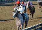 "Vineyard Haven, winner of the 2008 Hopeful Stakes, is training in Dubai. <br><a target=""blank"" href=""http://www.bloodhorse.com/horse-racing/photo-store?ref=http%3A%2F%2Fpictopia.com%2Fperl%2Fgal%3Fprovider_id%3D368%26ptp_photo_id%3D5750072%0D%0A%26ref%3Dstory"">Order This Photo</a>"