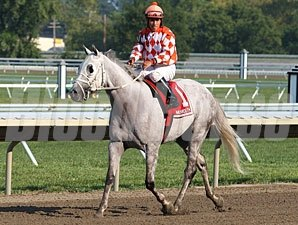 Tune Me In wins the 2012 Cliff Hanger Stakes.