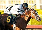Take Charge Brandi Wires Starlet Thriller