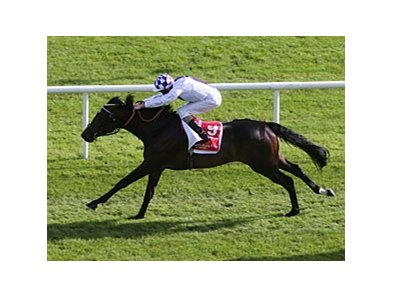 "2013 Irish Derby winner Trading Leather<br><a target=""blank"" href=""http://photos.bloodhorse.com/AtTheRaces-1/at-the-races-2013/27257665_QgCqdh#!i=2610818081&k=tDZHBJ7"">Order This Photo</a>"