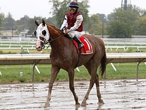 Etched wins the 2010 Formal Gold.