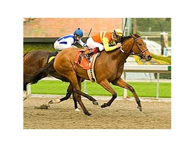 "Tiz Elemental winning the 2008 Honest Lady Stakes at Santa Anita <br><a target=""blank"" href=""http://www.bloodhorse.com/horse-racing/photo-store?ref=http%3A%2F%2Fpictopia.com%2Fperl%2Fgal%3Fprovider_id%3D368%26ptp_photo_id%3D3672208%0D%0A%26ref%3Dstory"">Order This Photo</a>"