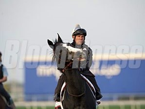Meandre - Dubai March 27, 2013