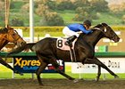 "Einstein is scheduled to make his next start in the Pacific Classic.<br><a target=""blank"" href=""http://www.bloodhorse.com/horse-racing/photo-store?ref=http%3A%2F%2Fpictopia.com%2Fperl%2Fgal%3Fprovider_id%3D368%26ptp_photo_id%3D7865360%26ref%3Dstory"">Order This Photo</a>"