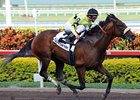 "Florida Derby winner Quality Road returns in the Amsterdam. <br><a target=""blank"" href=""http://www.bloodhorse.com/horse-racing/photo-store?ref=http%3A%2F%2Fpictopia.com%2Fperl%2Fgal%3Fprovider_id%3D368%26ptp_photo_id%3D7964933%26ref%3Dstory"">Order This Photo</a>"
