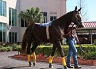 Giant Oak in the Fair Grounds paddock on Feb. 5.