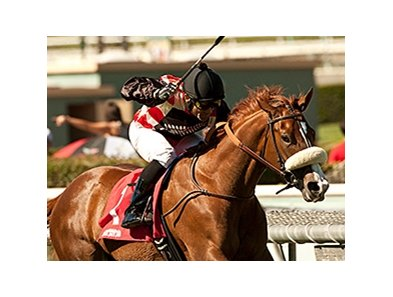 Aotearoa won the 2013 Zuma Beach Stakes.